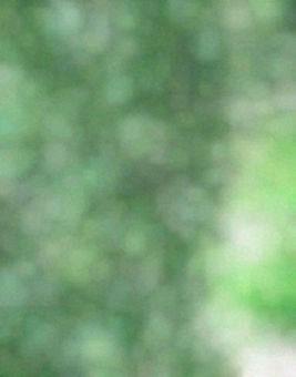 녹색 잎과 코모 레비