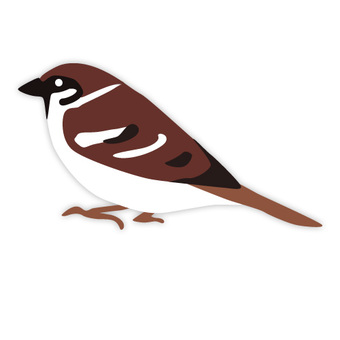 Sparrow (familiar bird)