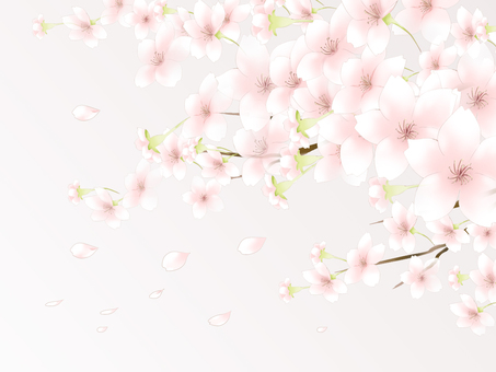 Cherry blossom background 5