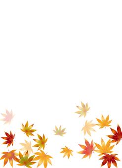 Autumn leaves 219