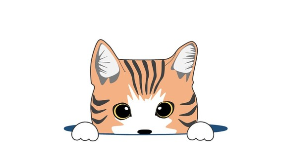 A little cat Orange