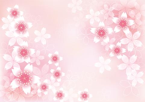 벚꽃의 꽃 23