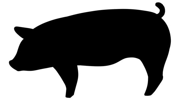 Pig black