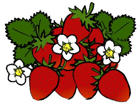 Japanese Strawberry