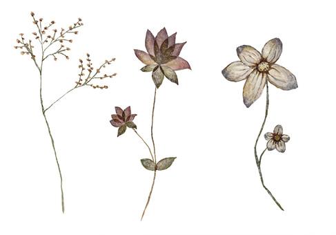 Pressed flower 2