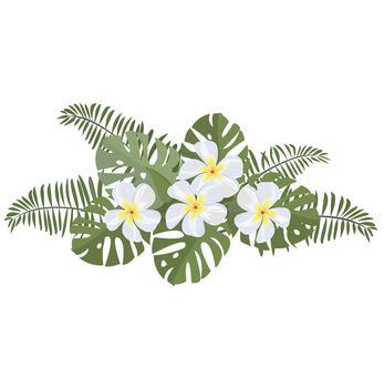 Plumeria tropical image