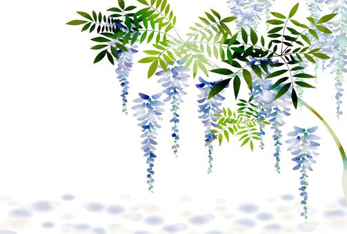 포도 나무 9