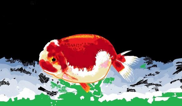 Rancyo (goldfish)
