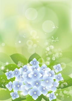 녹색 & 수국 15