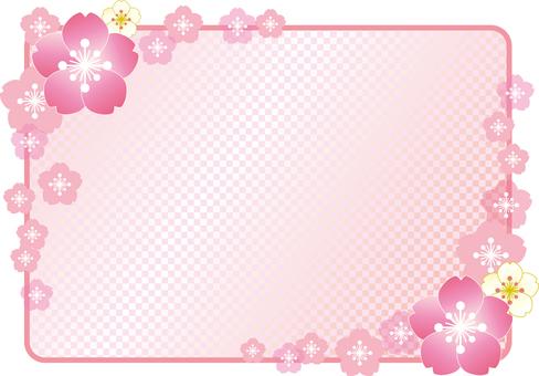 벚꽃의 프레임 19
