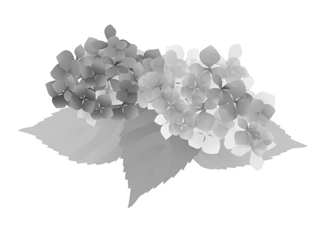 Hydrangea 01 monochrome ver.