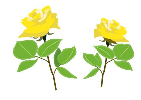 rose_ yellow rose