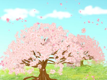 Sakura ②