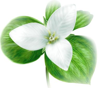 Flower of French elaree