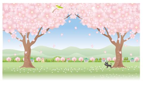 Cherry tree and kitten