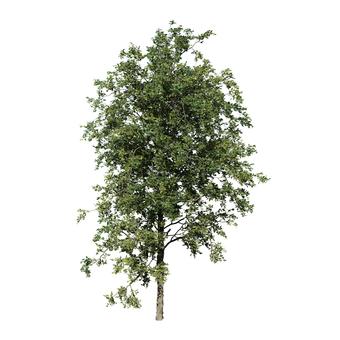 리얼한 나무 (CG) _004