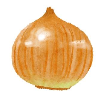 Watercolor ingredients series onion