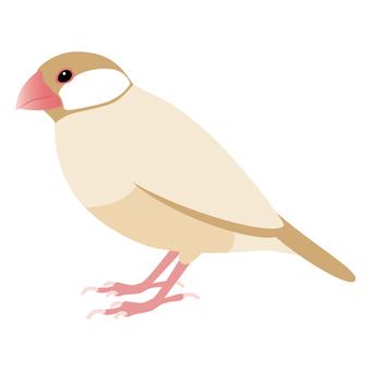 Cinnamon Bird