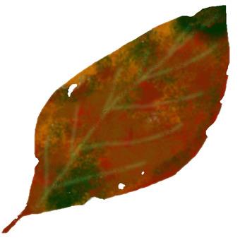 Dead leaf one sheet
