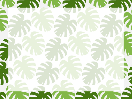 Monstera background green