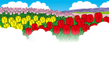Tulip field (for title back)