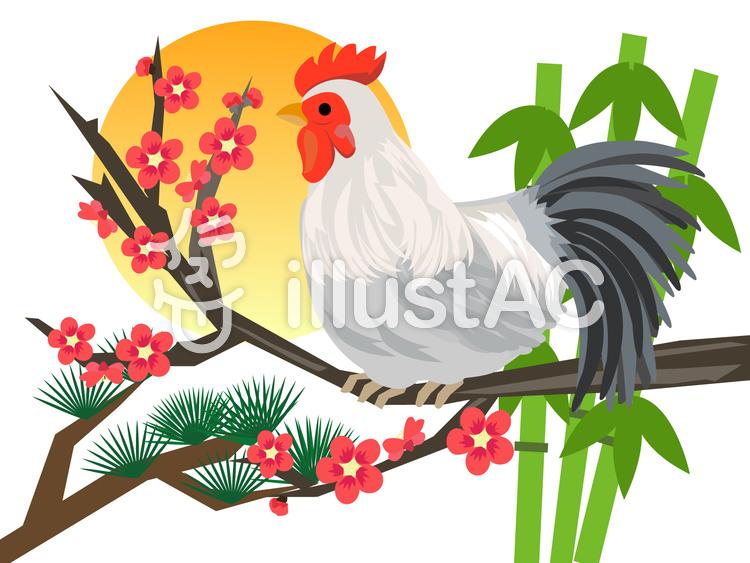 酉年 鶏と松竹梅のイラスト