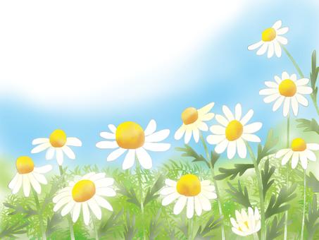 Healing (chamomile)