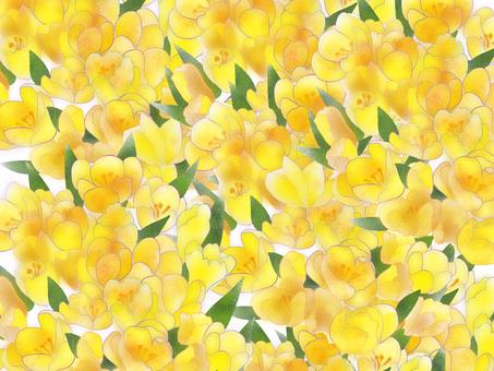Crocus wallpaper yellow