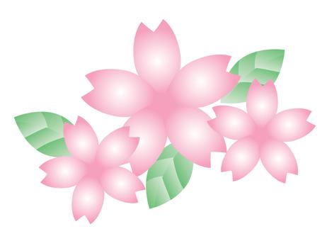 Sakura's flower