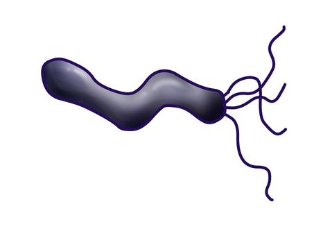 Purple Helicobacter pylori