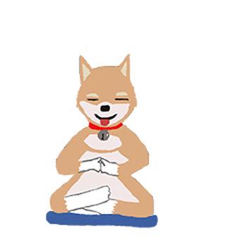 Dog to meditate