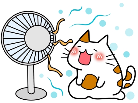 Fan and cat