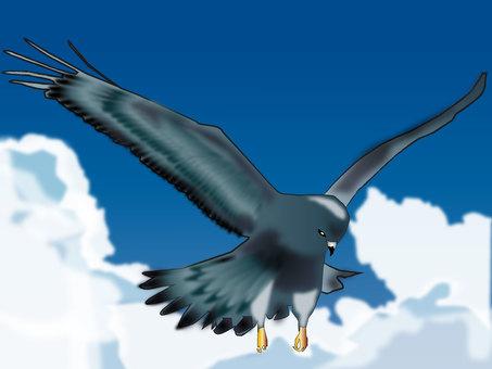 독수리 08