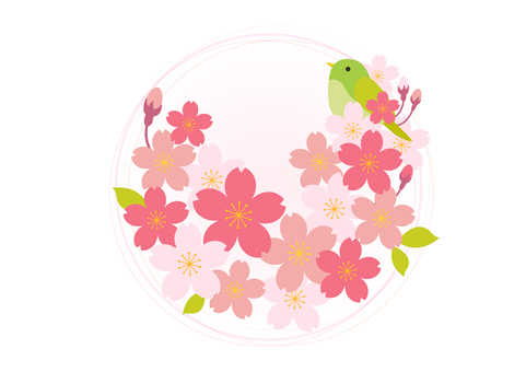 Sakura 396