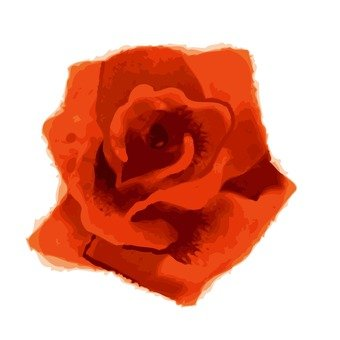 Rose of Orange