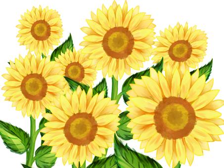 Sunflower 3 watercolor