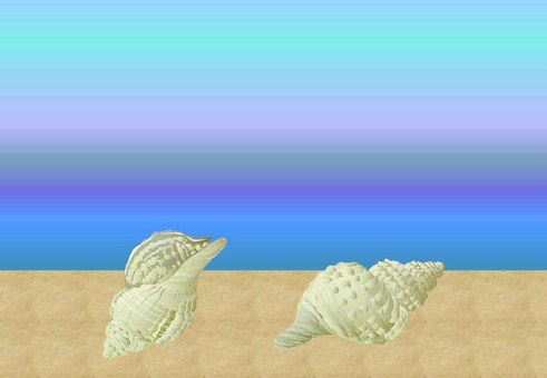 Sea and shells