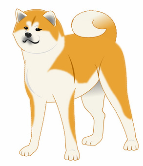 Akita dog illustration 02