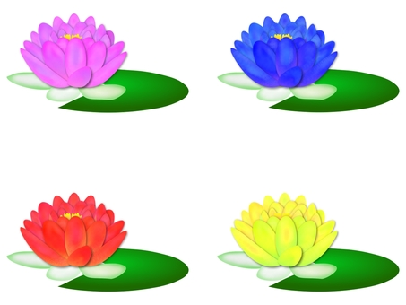 Water lily 4 colors