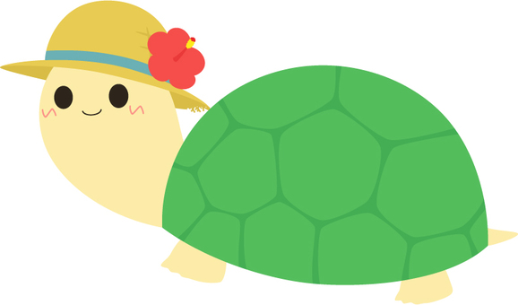 Turtle _ turtle of a hat