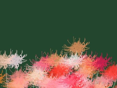 Higanbana flower 3