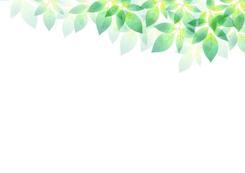 Fresh green material 81