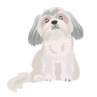 Shih Tzu dog sitting