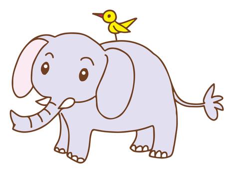 大象和鳥類