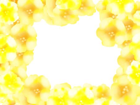 petunia