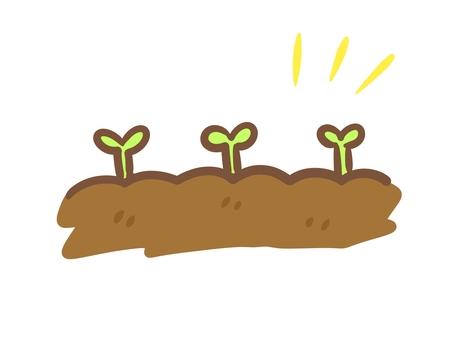 土壤和植物