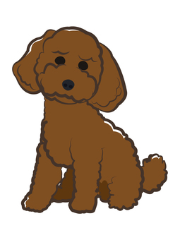 Dog _ Toy Poodle
