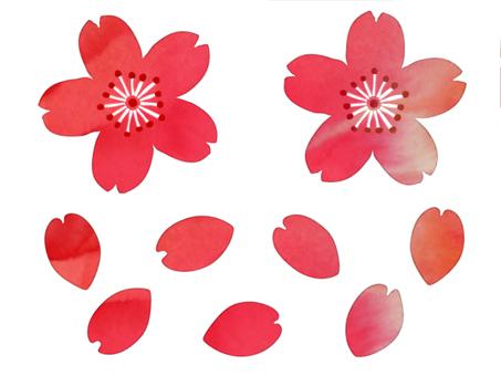 Watercolor Wind - Sakura 01