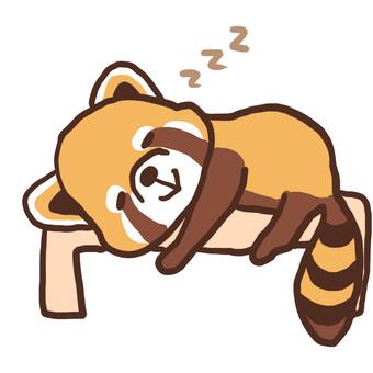 Lesser panda