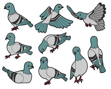 9 pigeons